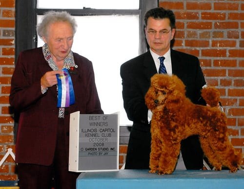 CH Sanew's Torquay Red Legacy (Paris), Breed Championship, Illinois Capitol KC 2008